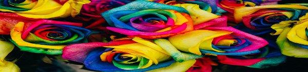Corso Test colori di Lüscher e Fiori di Bach Online Roma